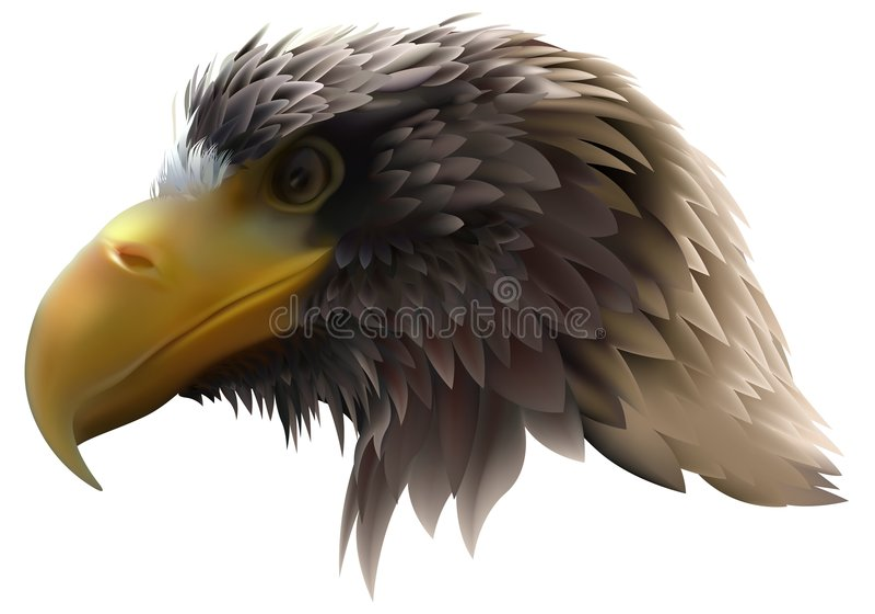 Aigle d'or (pelagicus de Haliaeetus) illustration stock