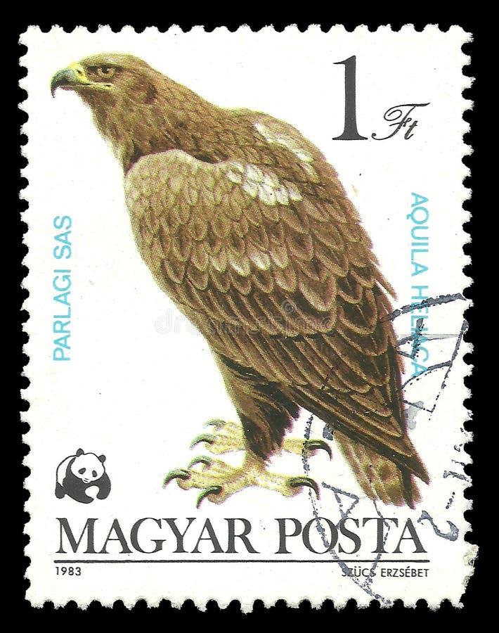 Aigle impérial oriental photos libres de droits