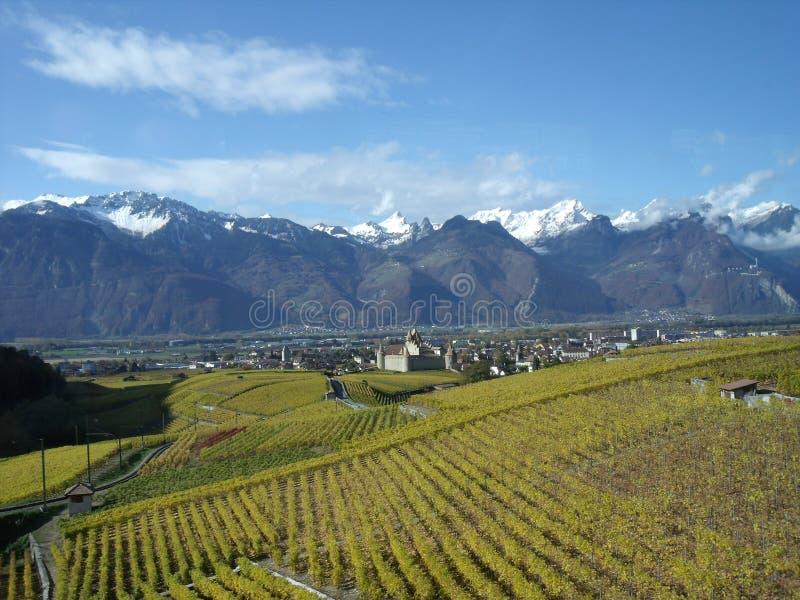 aigle suisse zdjęcie stock