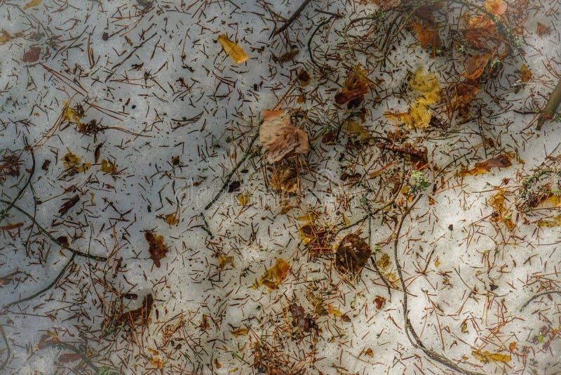 Aiguilles, écorce et brindilles de pin des arbres, mousse verte sur la neige de fonte photo libre de droits