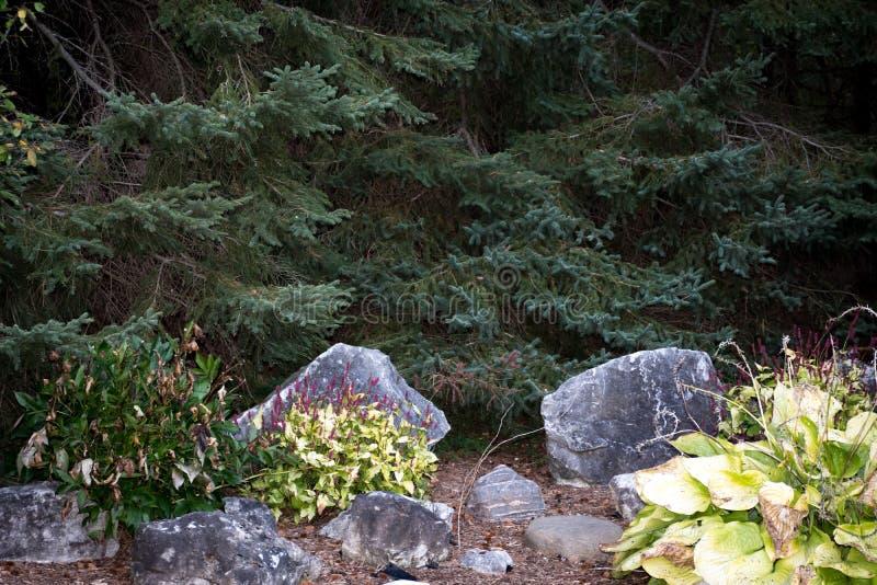 Aiguilles de pins dans le jardin en pierre photos stock