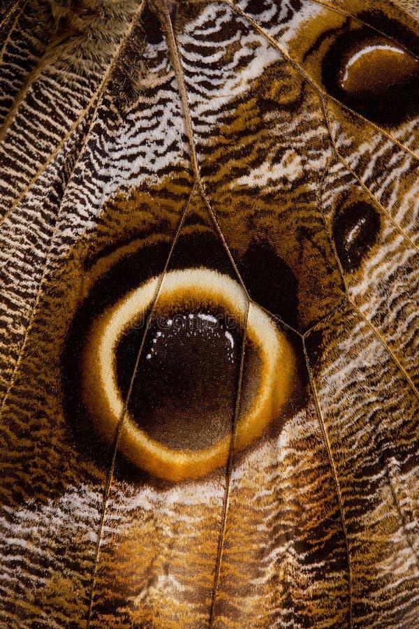 Aile de guindineau images libres de droits