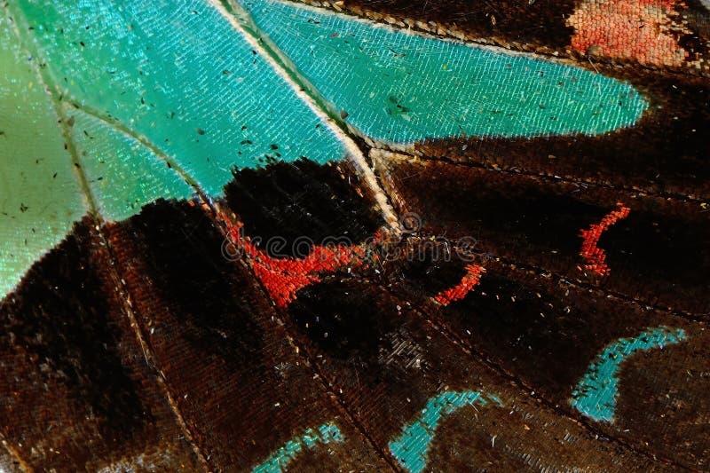 Aile de papillon photos stock