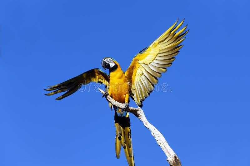 Aile de perroquet photos libres de droits