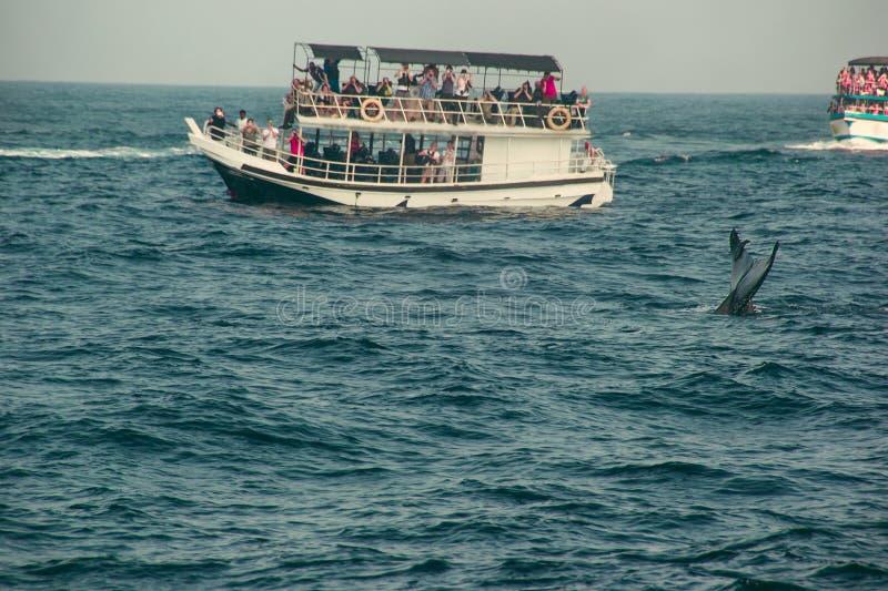 Aileron de queue de baleine bleue plongeant profondément, l'Océan Indien Fond de nature de faune Impression de touristes Voyage d image stock