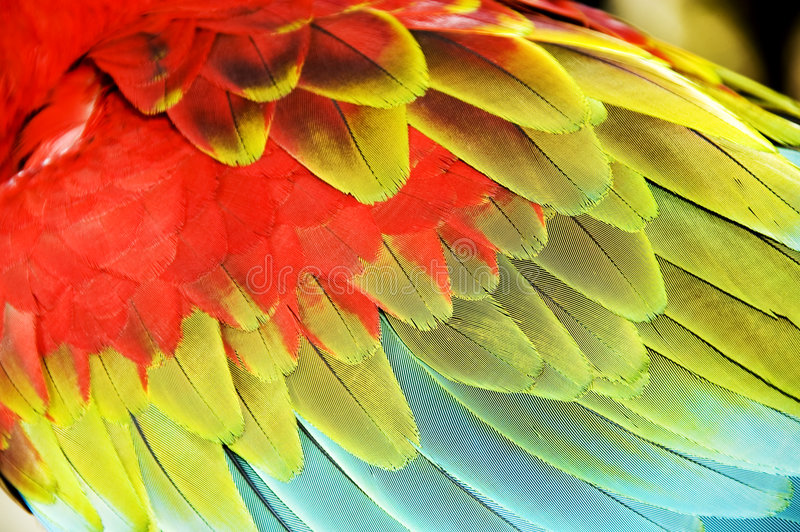 Ailes colorées de macaw photo libre de droits