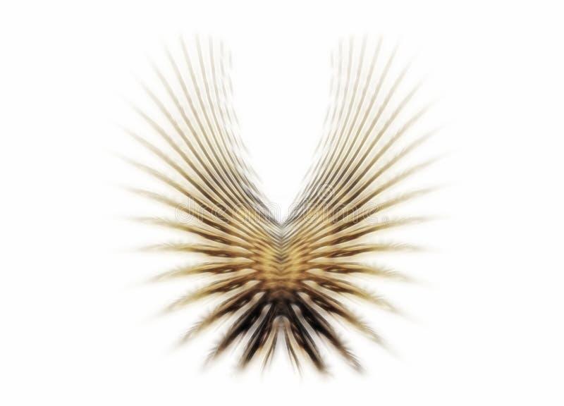ailes d'or illustration de vecteur