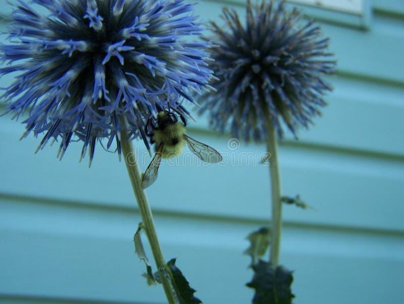 Ailes d'abeille image stock