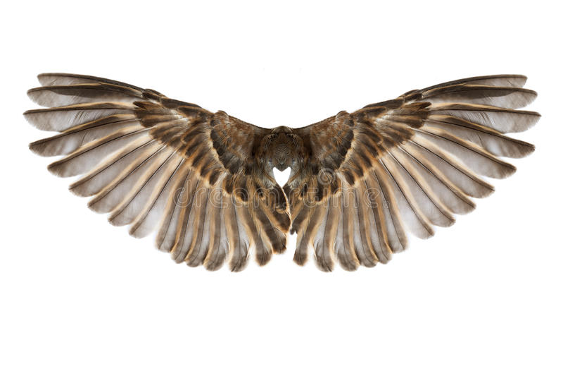 Ailes d'oiseau d'isolement sur le blanc photos stock