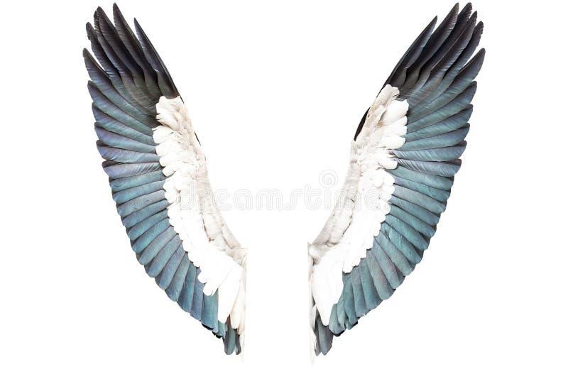 Ailes d'oiseau d'isolement sur le fond blanc image libre de droits