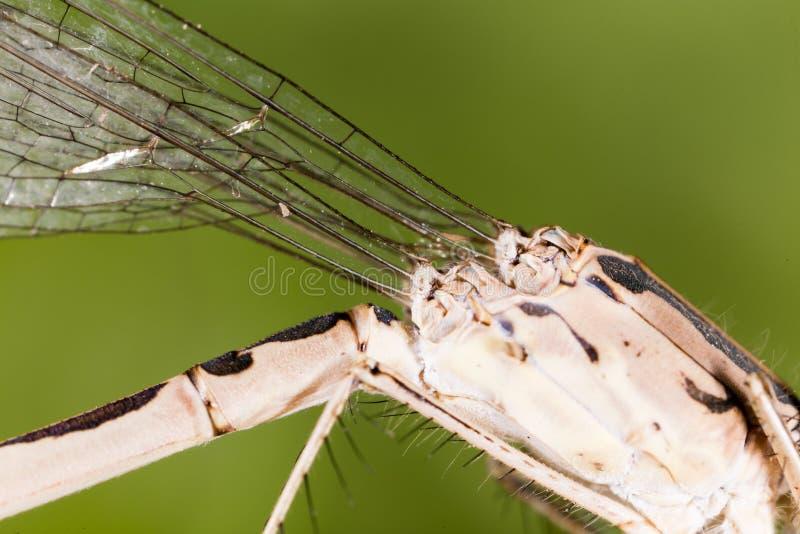 Ailes d'une libellule comme fond images libres de droits