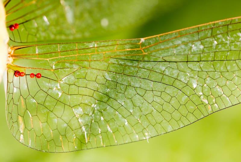 Ailes d'une libellule comme fond photo stock