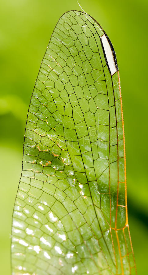 Ailes d'une libellule comme fond photo libre de droits
