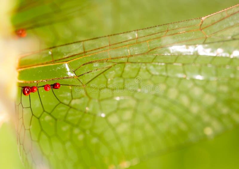 Ailes d'une libellule comme fond photos libres de droits