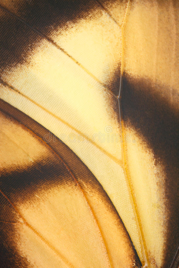 Ailes de papillon. image stock