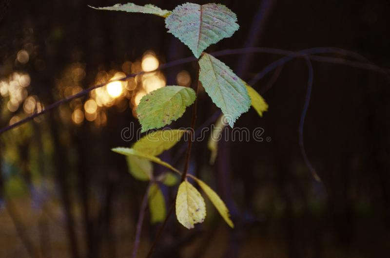 Ailes des feuilles photos stock