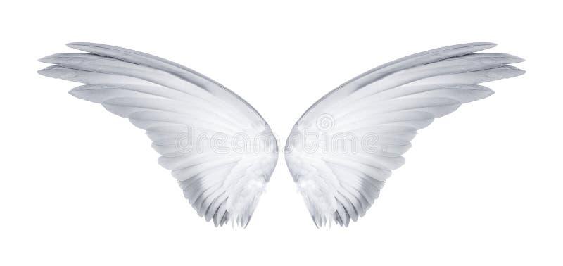 Ailes des oiseaux d'isolement sur le fond blanc images libres de droits