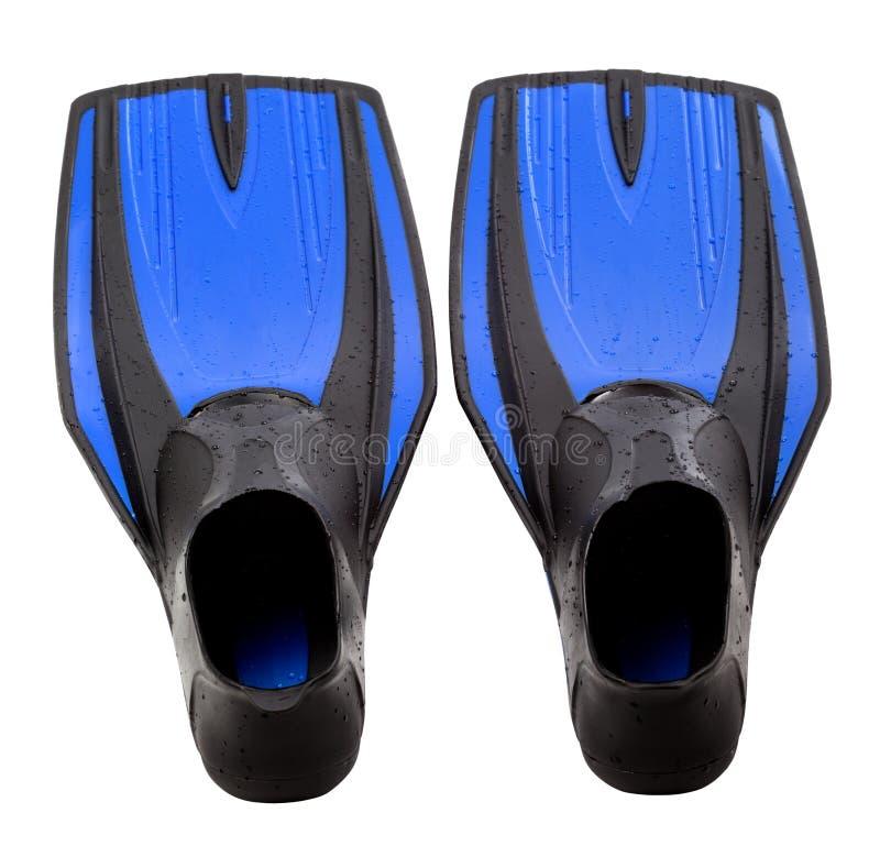 Ailettes de bain bleues image stock