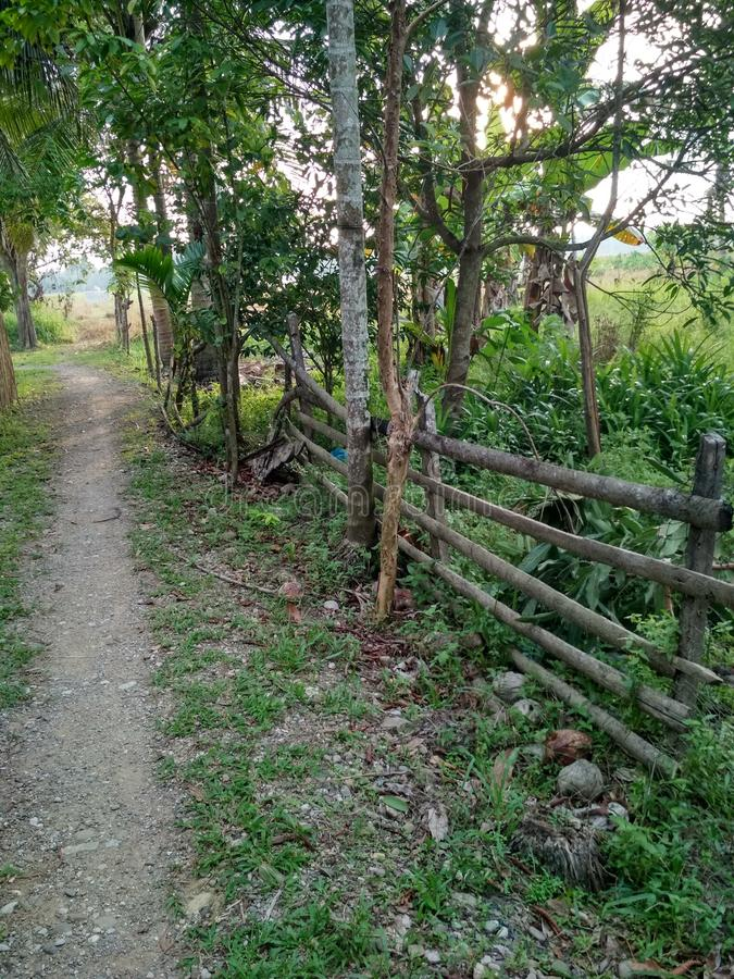 Ain`t modernazation in this village. Raw road silent peacefull land palm fence simple grass stone village field trees bush jungle horizon lhoksukon aceh stock images