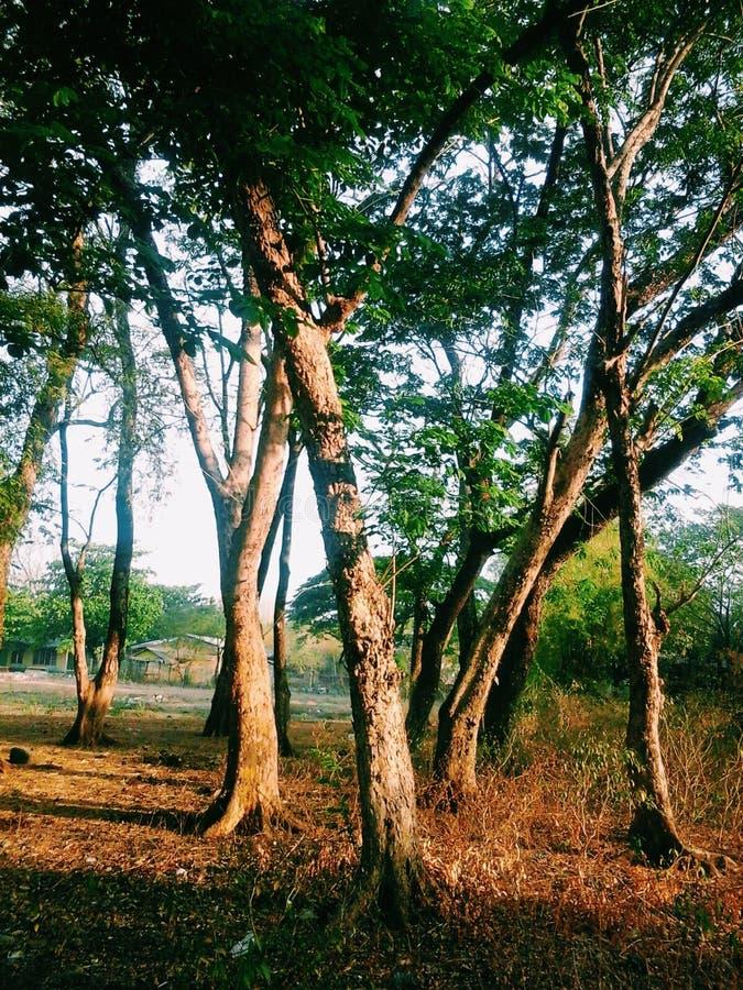 Ainda árvores imagem de stock