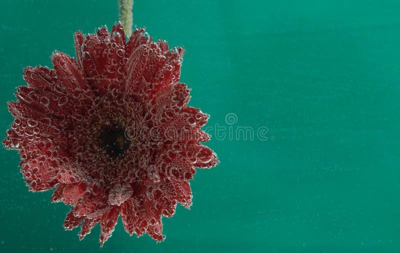 Ainda flores da vida sob a água fotos de stock
