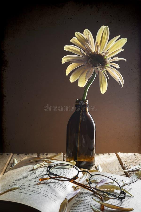 Ainda livro dos vidros do gerbera da flor da vida imagens de stock