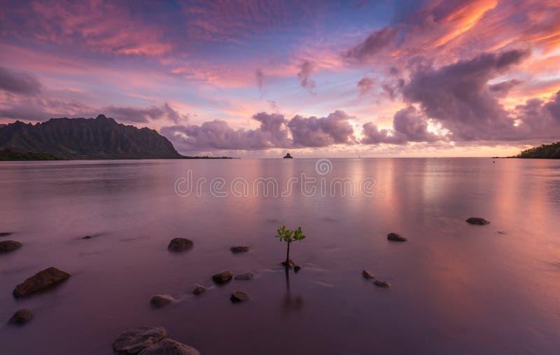 Ainda nascer do sol na zona leste de Oahu, Havaí fotografia de stock