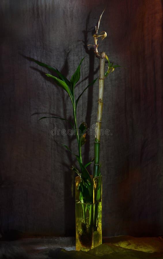 Ainda-vida com bambu imagem de stock royalty free