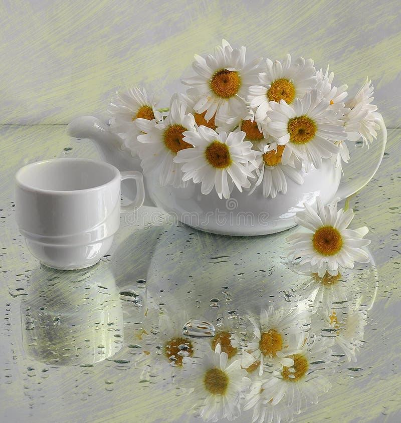 Ainda vida com camomiles em um tea-pot foto de stock royalty free