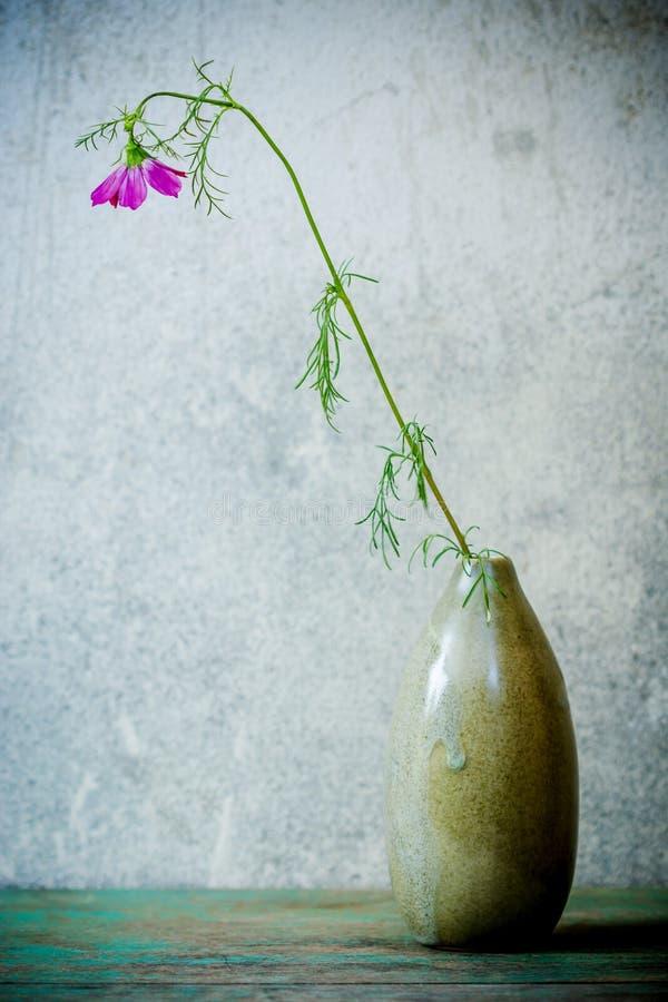 Ainda vida com a flor cor-de-rosa do cosmos foto de stock royalty free