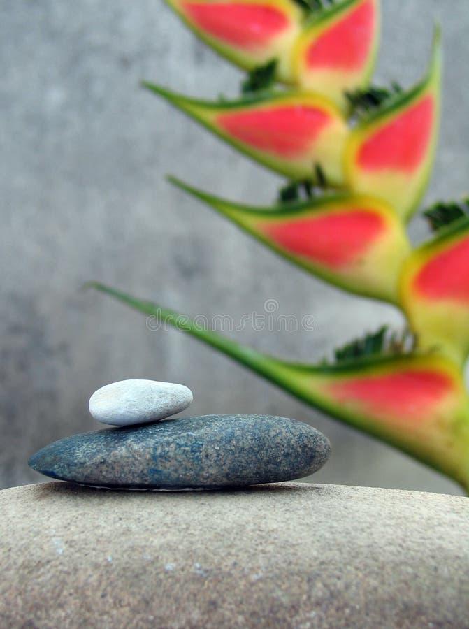 Ainda vida com flor tropical imagens de stock