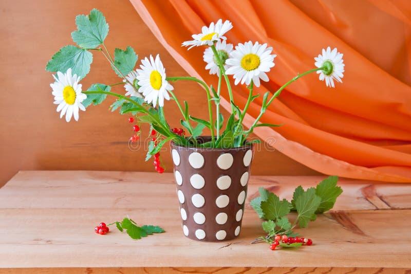 Ainda vida com flores da margarida e o corinto vermelho imagem de stock royalty free