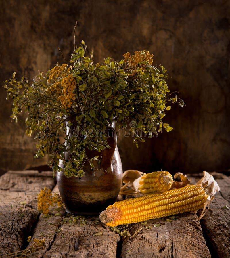 Ainda a vida com milho, o mirtilo e o tansy secados ramifica fotografia de stock royalty free