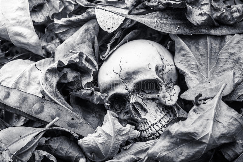 Ainda vida, crânio humano nas folhas secas imagens de stock royalty free