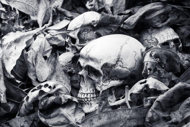 Ainda vida, crânio humano nas folhas secas imagem de stock