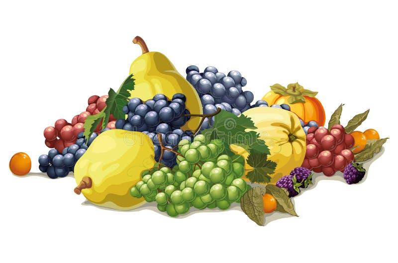 Ainda vida das uvas e do marmelo ilustração do vetor