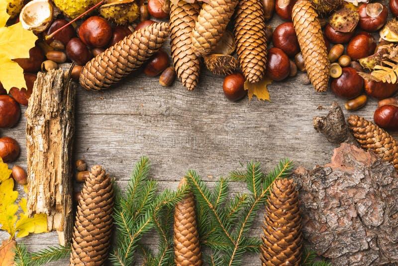 Ainda vida de ingredientes do outono imagem de stock