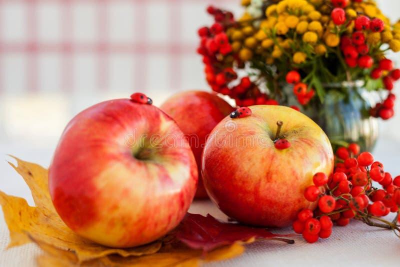 Ainda vida de maçãs maduras vermelhas nos spikelets foto de stock royalty free