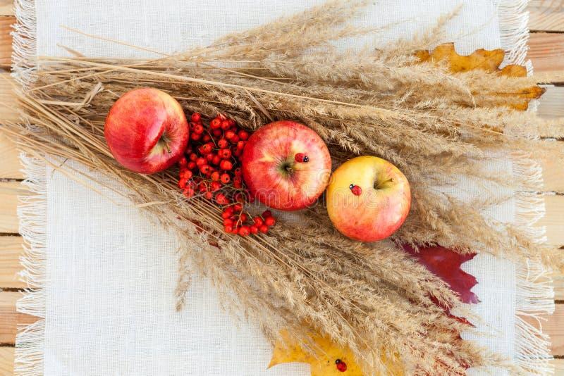 Ainda vida de maçãs maduras vermelhas nos spikelets fotos de stock royalty free