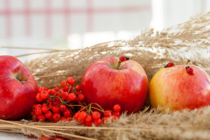 Ainda vida de maçãs maduras vermelhas nos spikelets fotografia de stock