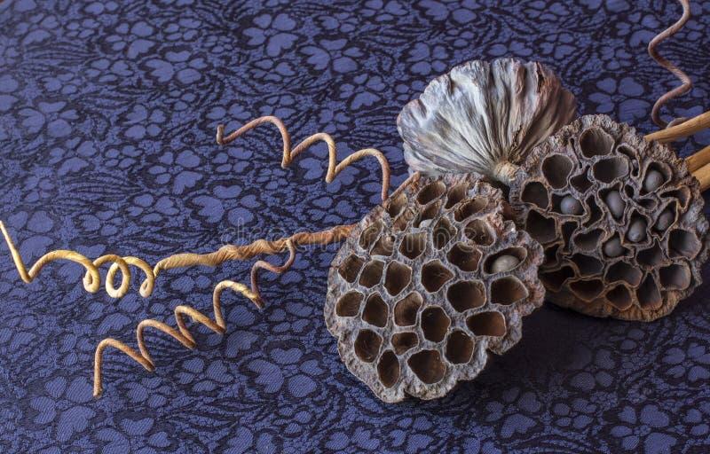 Ainda vida - ikebana de lótus e de bolas secos do coco Fundo de matéria têxtil imagens de stock royalty free