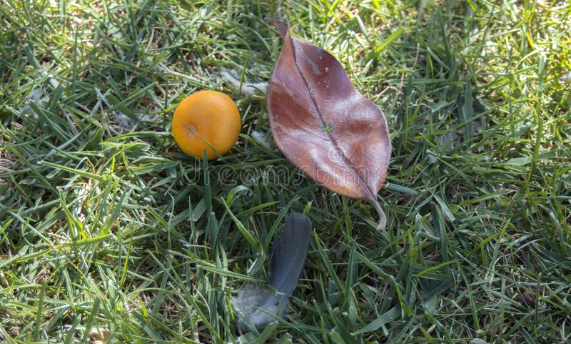 Ainda vida na grama - o mandarino, cone da magnólia e pena de pássaro Kavala, Greece imagens de stock