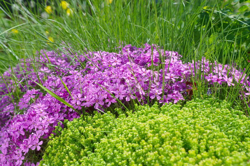 Aiola con il flox di fioritura nel giardino fotografia stock libera da diritti