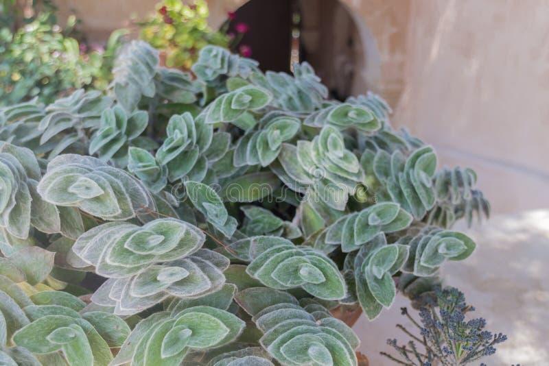 Aiola con la pianta succulente fotografie stock libere da diritti