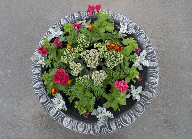 Aiola di pietra rotonda di fioritura del vaso immagine stock