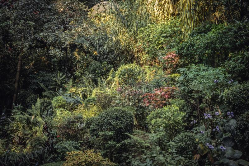 Aiola in giardino fertile con architettura del p?saggio in giardino botanico reale Peradeniya nello Sri Lanka Kandy vicina fotografie stock
