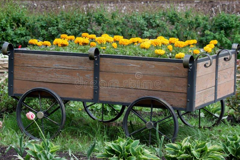 Aiola sotto forma di carretto di legno con la coltura dei tageti bei fotografia stock