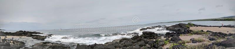 Aiopio-Fische schließen Küste ein lizenzfreie stockfotografie