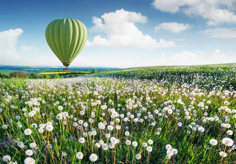 Air ballon above field with flowers at the summer time. royalty free stock image