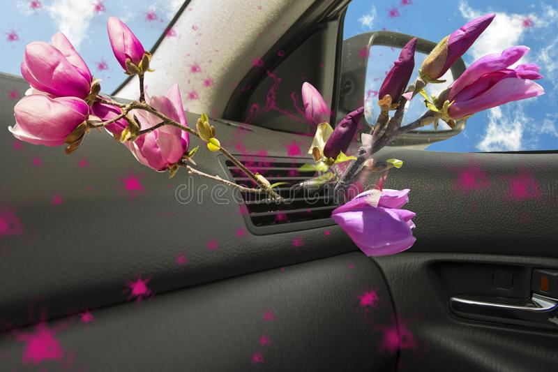 Air conductors car magnolia flower aroma royalty free stock photo